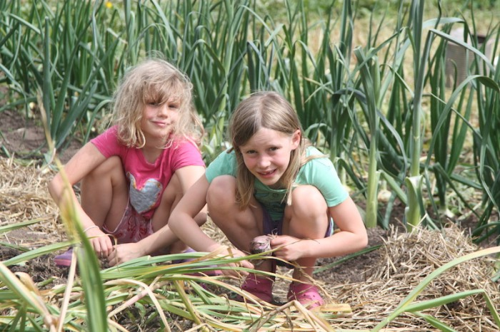 HUFA - Selling Garlic